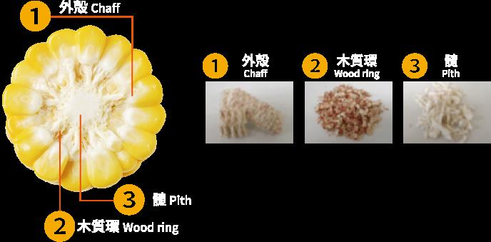 トウモロコシ芯の三層構造