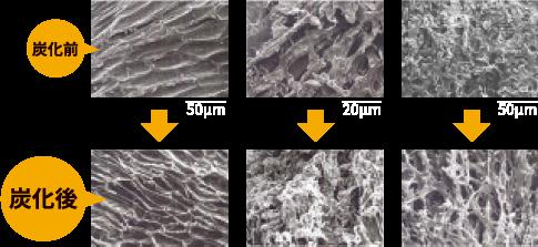 トウモロコシ芯の顕微鏡写真